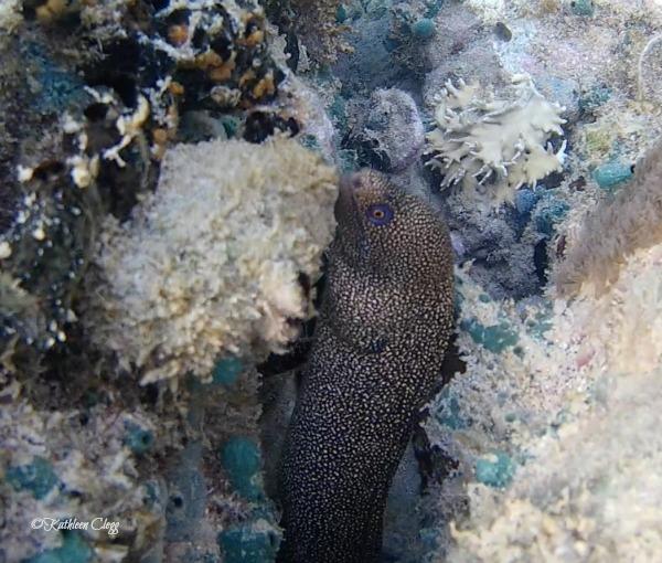 Top 6 Snorkeling Beaches in Martinique Anse Mitan