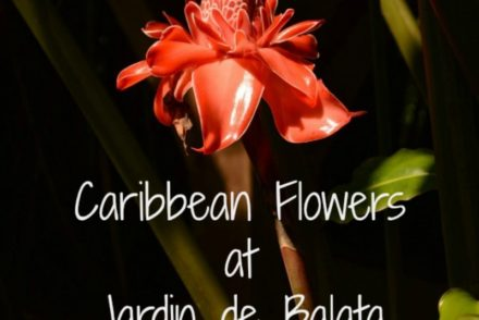Caribbean Flowers at Jardin de Balata