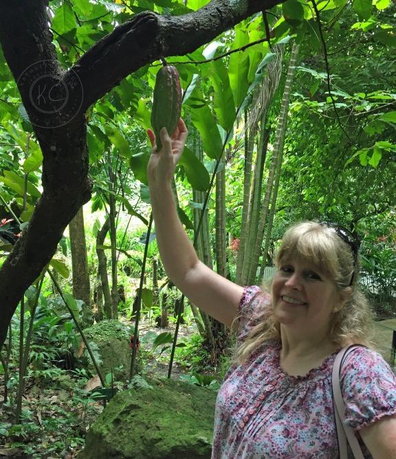 Diamond Botanical Gardens Saint Lucia pebblepirouette.com #caribbean #saintlucia #botanicalgardens #flowers #tropicalflowers