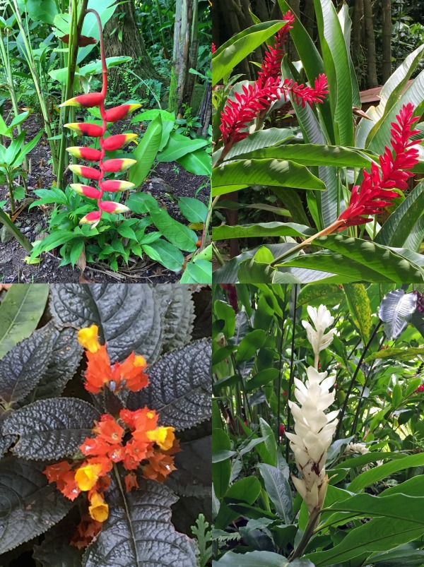 Diamond Botanical Gardens Saint Lucia beautiful flowers pebblepirouette.com #caribbean #saintlucia #botanicalgardens #flowers #tropicalflowers