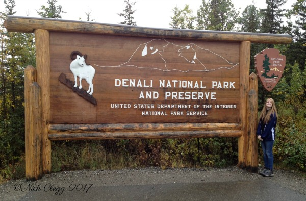 Denali National Park Guide and Tips pebblepirouette.com #denalinationalpark #denali #alaska #nationalparks