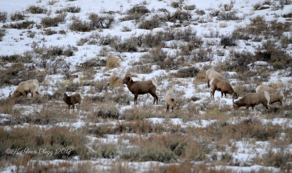 Day Trip to Jackson, Wyoming pebblepirouette.com #wyoming #jacksonwyoming #daytrip #wildlife #nationalelkrefuge