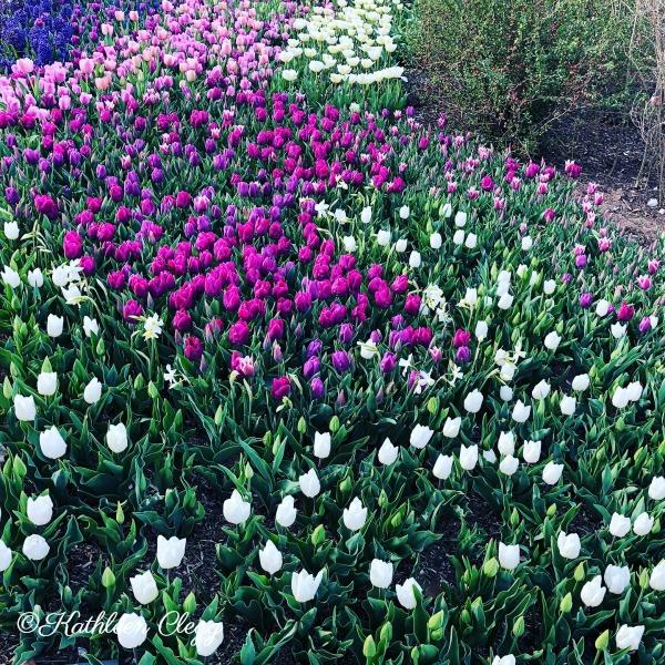Tulsa Botanic Gardens