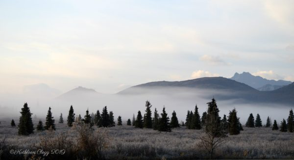 Denali National Park Road Lottery