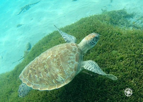 13 Turtle Photos for World Turtle Day